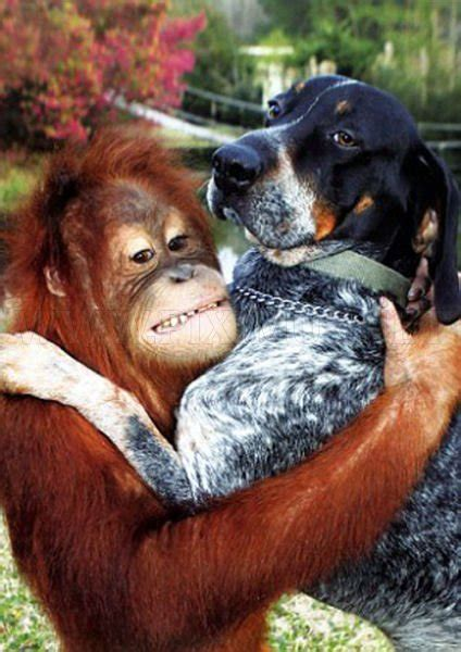 dog   orangutan  bff animals