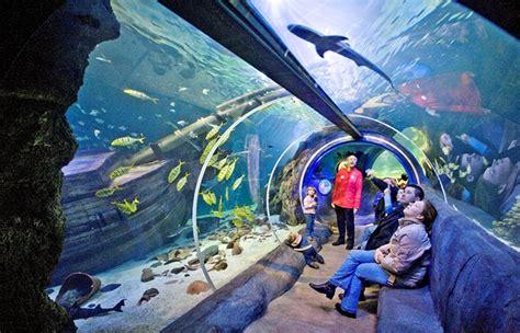 aquarium de val d europe sea val d europe csite disneyland