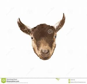 Pygmy Goat Head Vector Stock Vector - Image: 49303103