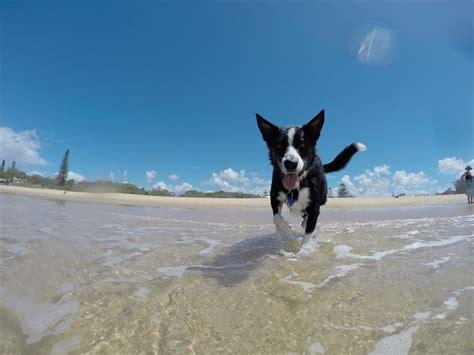 Free P O Dog Summer Water Happy Free Image On Pixabay