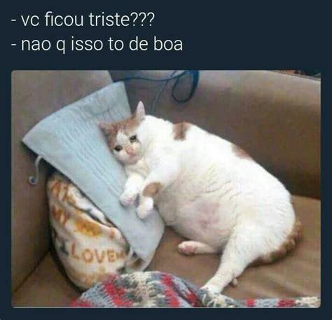 Gato Meme - gato gordo meme by joojador memedroid