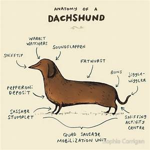 24 Best Totally Unscientific Animal Anatomical Diagrams