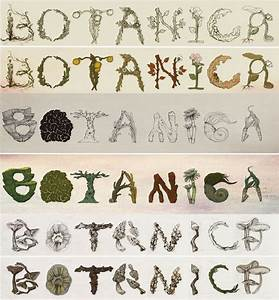 24 best images about creative alphabets on pinterest the With plant letters