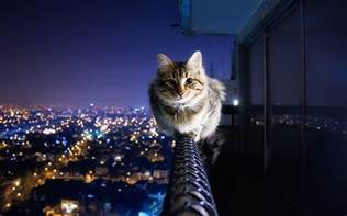 Guy Jumps Off Balcony by Cat Backgrounds Desktop Pixelstalk Net