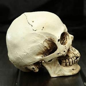 Kleine schedel