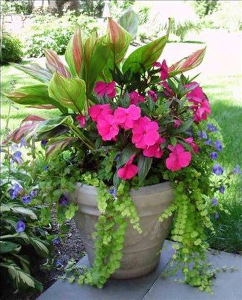 1000 Ideas About Flowers Garden On Pinterest Flower