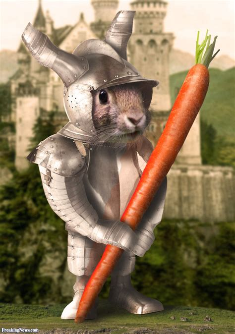 bunny knight   carrot pictures