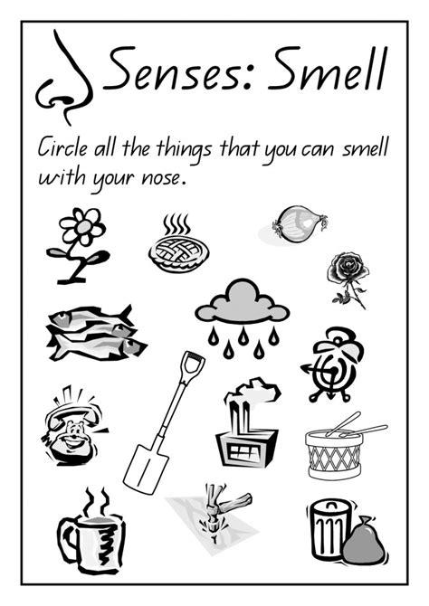 Kindergarten Science Worksheets Homeschooldressagecom