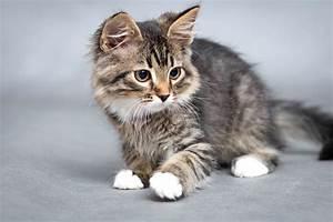 Site De Discussion : comment soigner une plaie chez un chat wikichat ~ Medecine-chirurgie-esthetiques.com Avis de Voitures