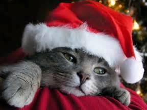 cat santa hat free desktop wallpaper for cat free