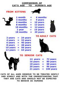 cat size chart cat posters