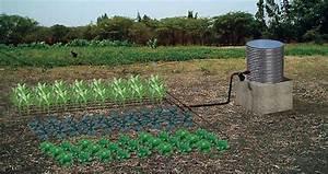 Système D Arrosage Goutte À Goutte : systeme irrigation goutte goutte ~ Melissatoandfro.com Idées de Décoration