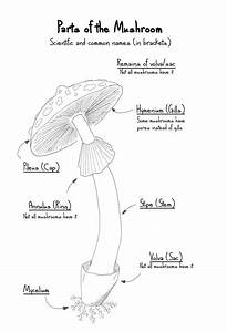 Anatomy Of A Mushroom And Life Cycle  Ud83c Udf44  Comic    Giveaway