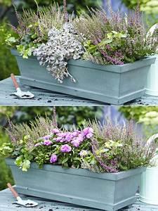 Herbstblumen Für Kübel : zwei varianten balkonkasten herbstlich bepflanzen ~ Buech-reservation.com Haus und Dekorationen