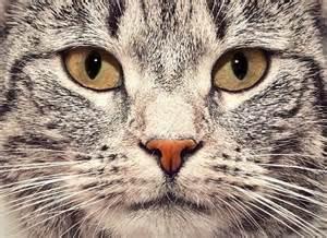 cat faces cat up portrait animal photos on