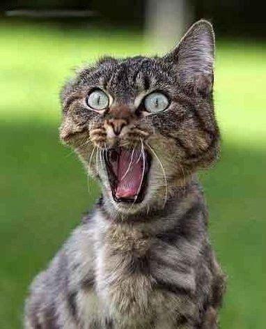 immagini divertenti  gatti spaventati elol
