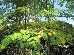 natural anti inflammatory herbs