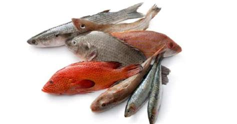 commercial fish types  productive fish farming  africa