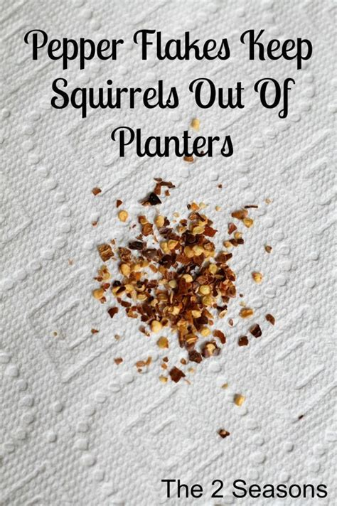 how to keep chipmunks out of your garden how to keep squirrels out of your planters gardening landscape pinterest gardens