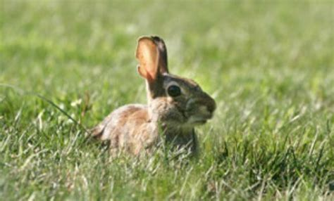 how to keep bunnies out of your garden keeping rabbits out of your garden thriftyfun