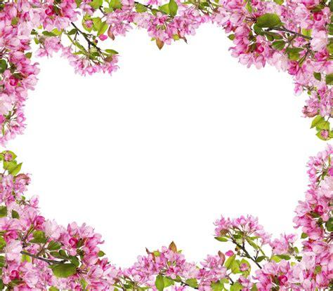rami di fiori carta da parati melo rosa rami di fiori telaio pixers