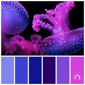 Color Palettes - astelle's colors
