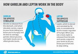 Pro Leptin En Farmacias
