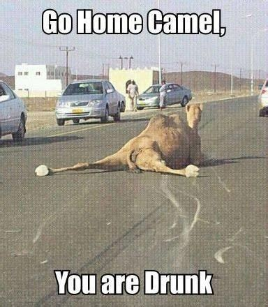 Memes And Funny Pictures - funny animal memes 2014 image memes at relatably com