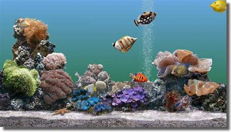 marine aquarium 2 screeny edownload cz