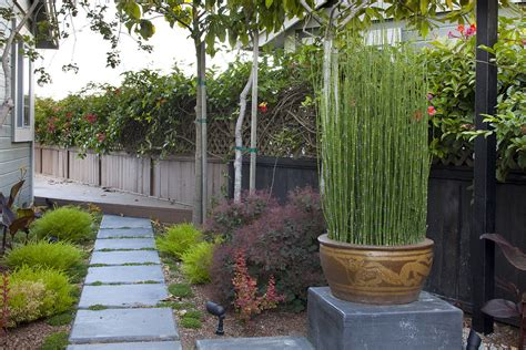 superb horsetail plant look san francisco asian landscape inspiration with none