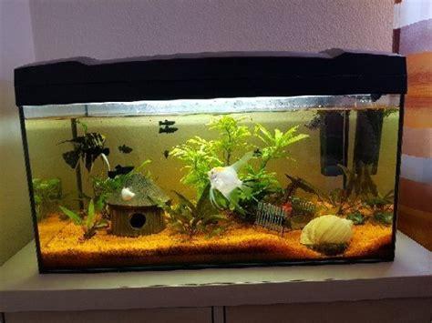 fische für 60 liter aquarium aquarium ca 60l in neuwied fische aquaristik kaufen und verkaufen 252 ber kleinanzeigen