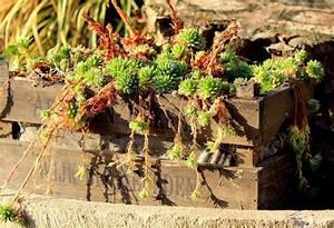 Garten Im September : der garten im september garten wissen ~ Watch28wear.com Haus und Dekorationen