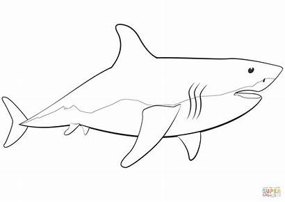 Shark Coloring Requin Blanc Coloriage Printable Imprimer