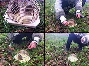 Produit Pour Tuer Les Rats : anti souris pi ge petite cage lot de 2 traitement anti insectes et souris ~ Voncanada.com Idées de Décoration