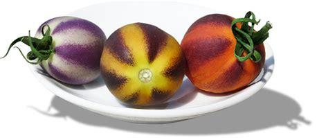 color tomato tomato colors