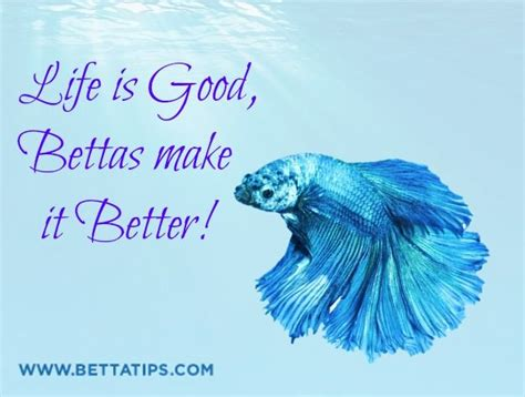 best images about you betta work it on 17 best images about betta on reasons to 17