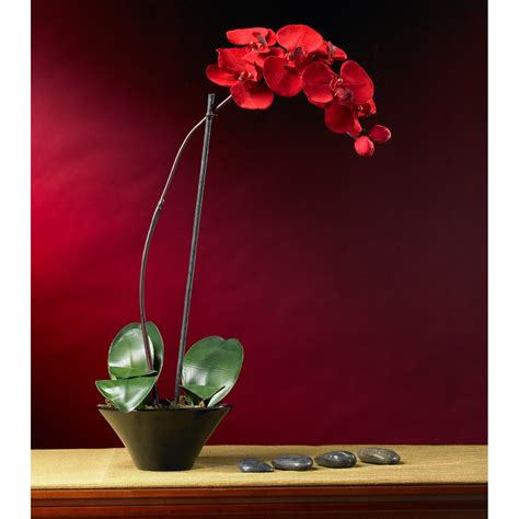 holiday phalaenopsis orchid arrangement wreaths  hayneedle