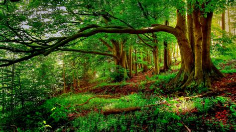 landscape trees  forest background trees tree hd nature