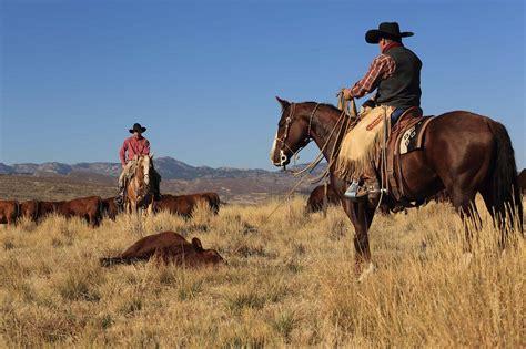 horses wagonhound livestock land