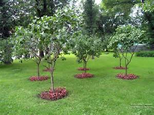 pictures of russia small trees garden