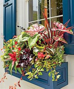 Pflanzen Für Balkonkästen Sonnig : balkonk sten bepflanzen sommer sonne rote farbtupfer pflanzen pinterest balkonk sten ~ Bigdaddyawards.com Haus und Dekorationen