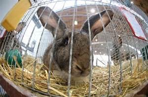 Fliesen Bei Obi : peta kampagne obi verkauft keine kleintiere mehr ~ Articles-book.com Haus und Dekorationen