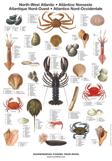 north west atlantic shellfish la tene maps