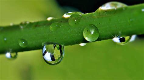 picture flora leaf nature rain droplet dew