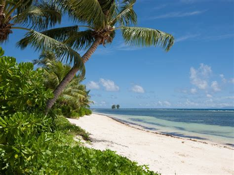 restaurant cuisine plage quot anse la réunion quot la digue seychelles