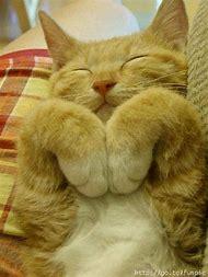 YMCA Cat