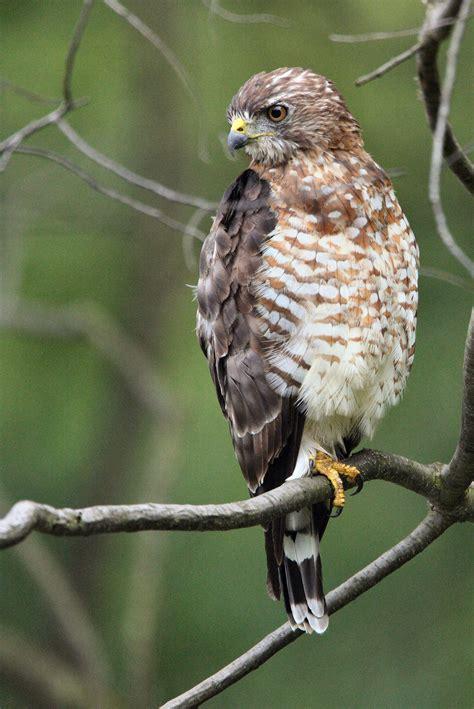 birding pennsylvania s big woods pennsylvania ebird