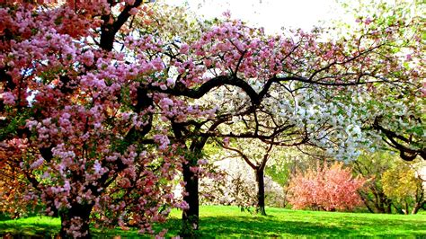 Colors Of Spring tree sunshine garden beauty nature