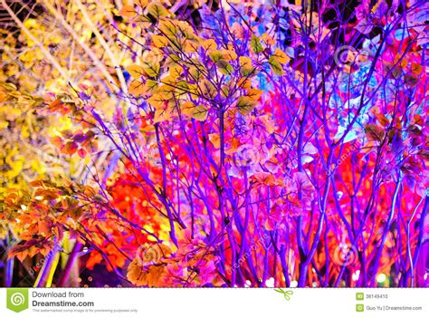 color tree color tree stock photo image of blue celebration