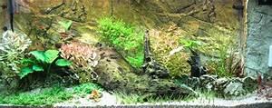 Aquarium Gestaltung Bilder : einrichtung eines aquariums hardscape aquarium welt ~ Lizthompson.info Haus und Dekorationen